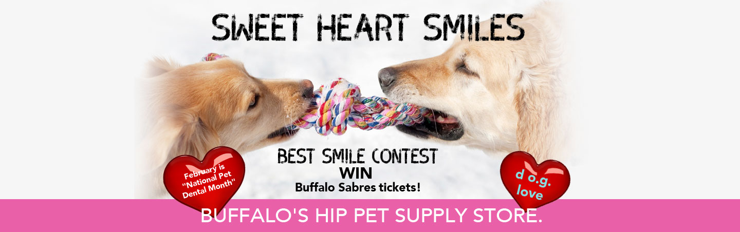 Notorious DOG February Best Smile Contest