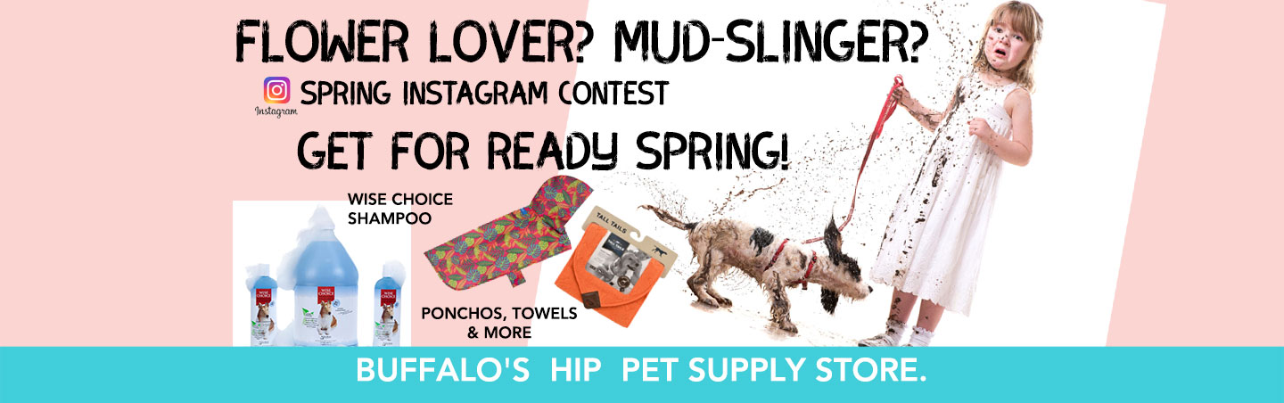 Celebrate Spring contest Notorious D.O.G.