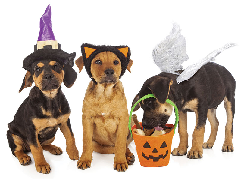 Halloween costume dogs