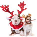Notorious D.O.G. holiday dog instagram contest