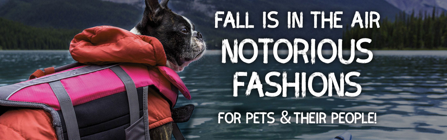 notorious fall fashions shop online and in store