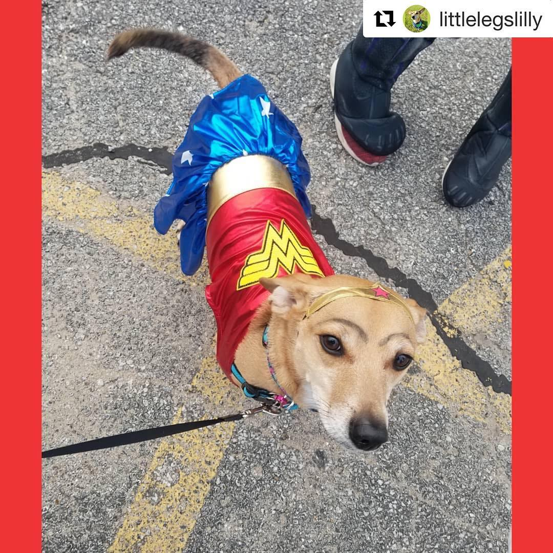notorious d.o.g. halloween costume contest winner Lily