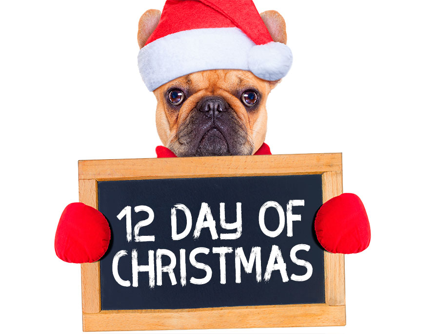 12 days of christmas notorious dog