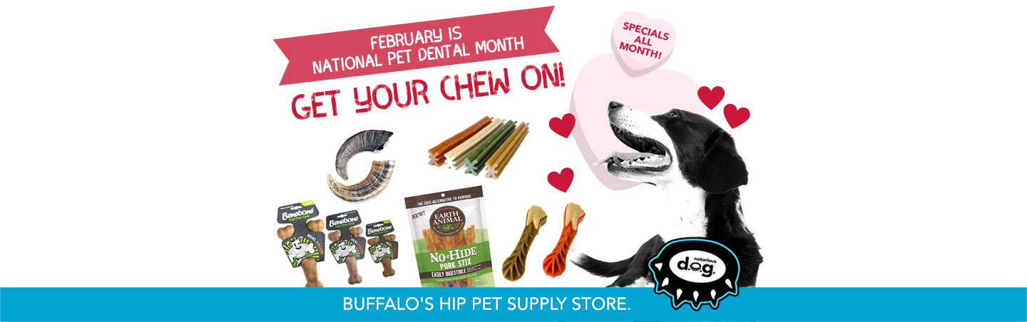 february specials for pet dental health month