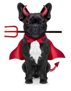 pug in devil costume